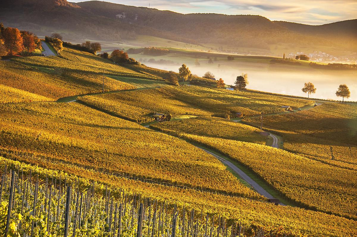 Logez Landschaftsbilder Herbststimmung Rebberg Hallau