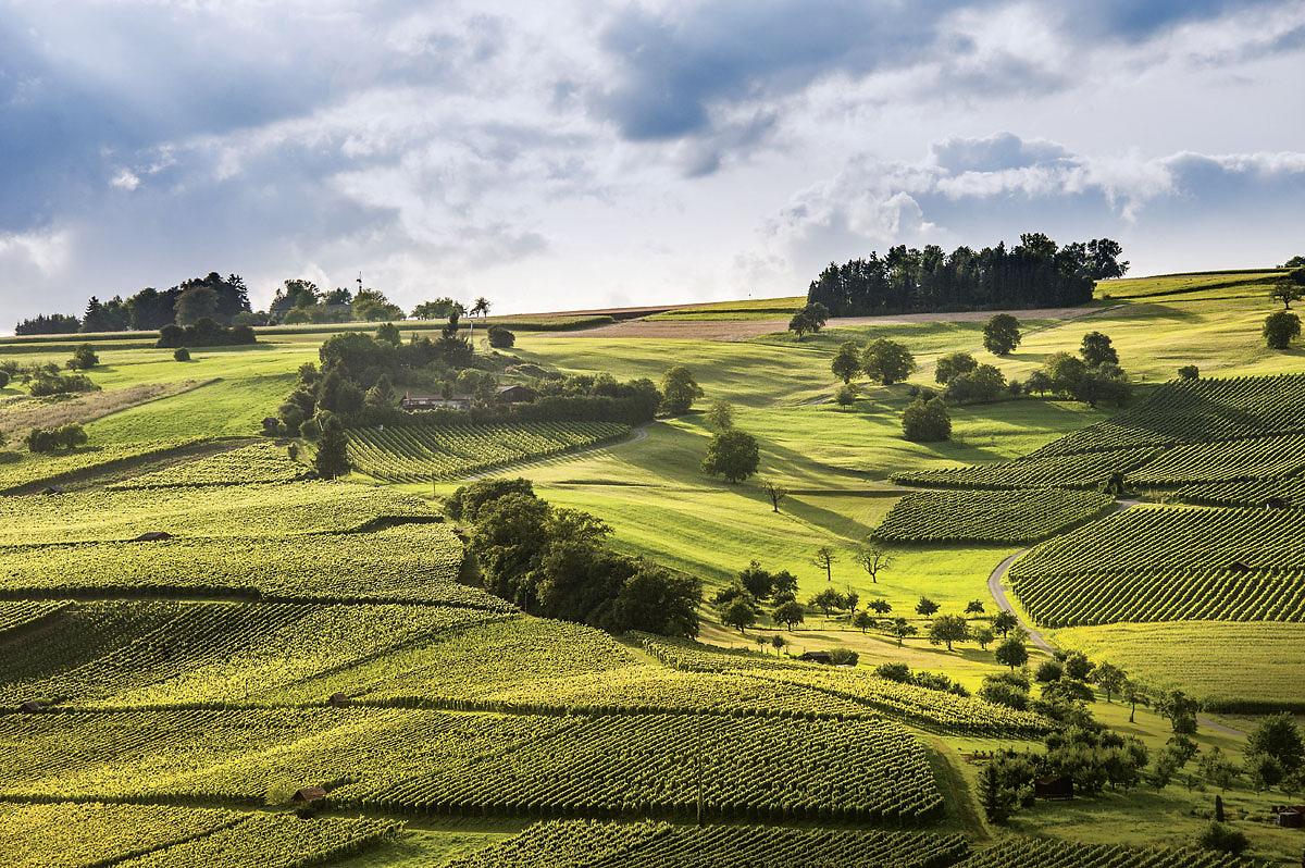 Logez Landschaftsbilder Hallau Rebberg