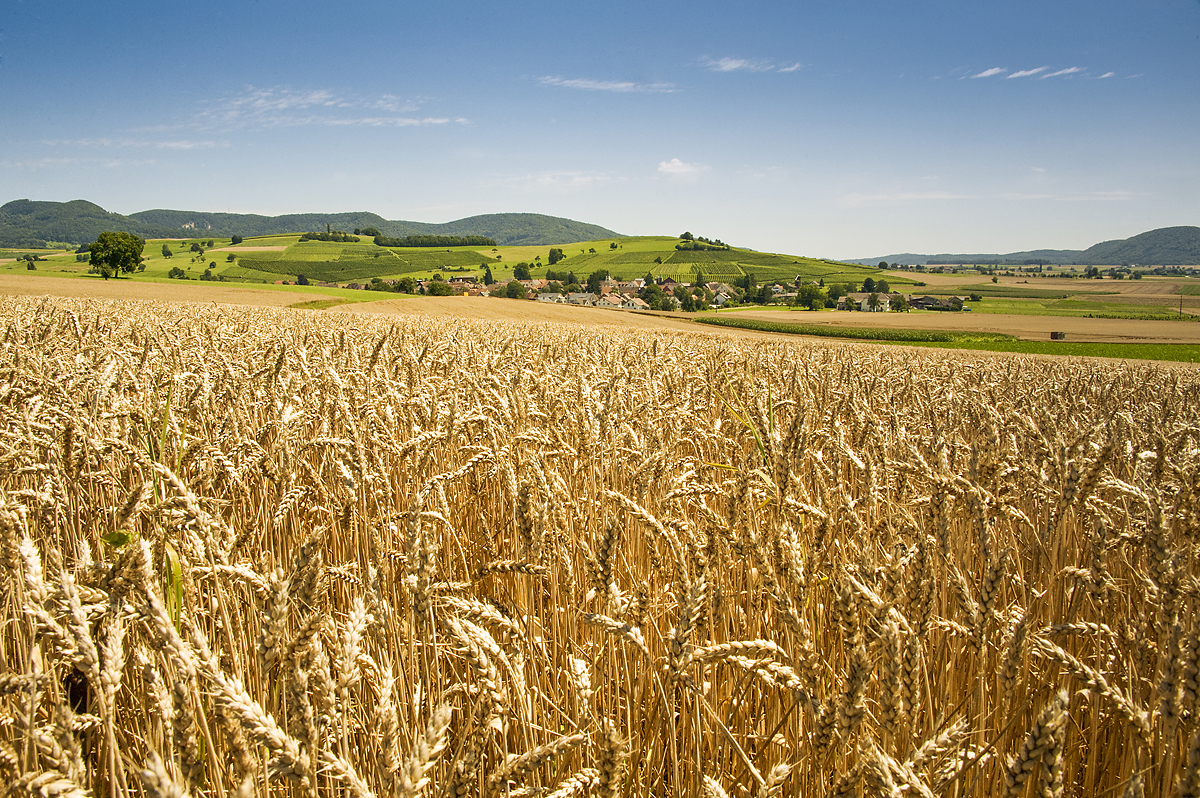 Logez Landschaftsbilder Hallau Feld