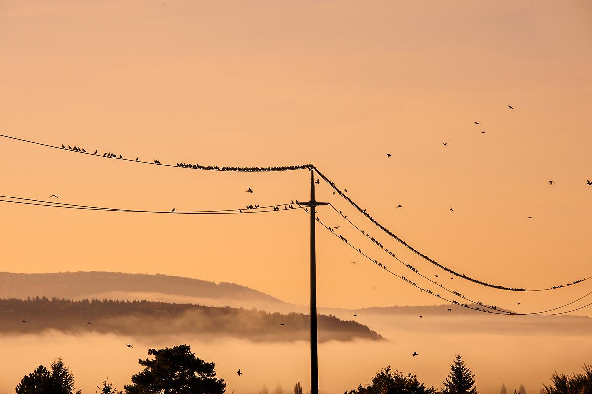 Logez Landschaftsbilder Hallau Vögel